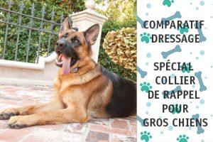 comparatif-collier-dressage-gros-chien