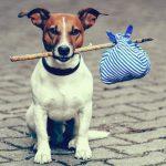 chien-stresser-en-voyage
