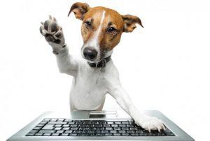 comparatif-prix-assurance-chien