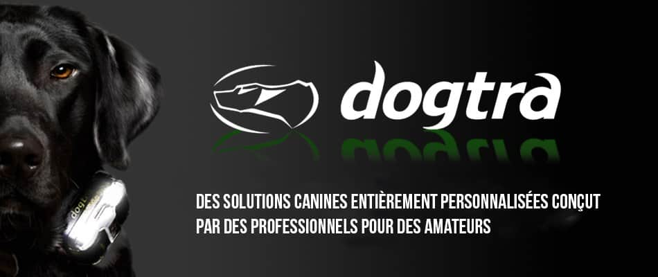 dogtra-avis-solutions-chiens