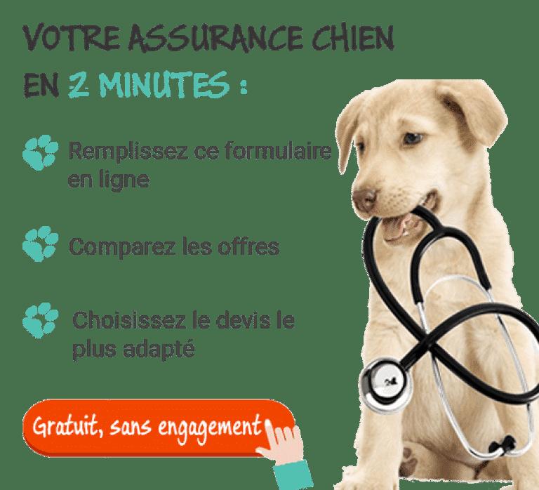 meilleure assurance pour chien