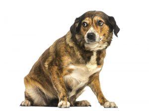 chien-qui-apeur