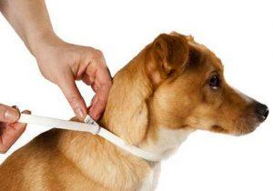 Collier anti parasite chien