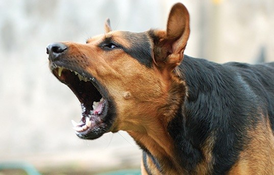 dressage chien qui aboie