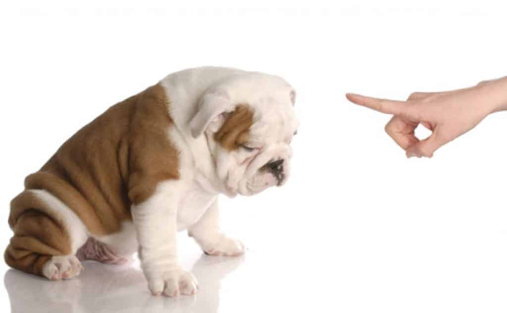 chien frusté