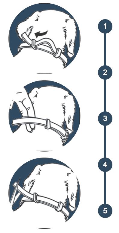 utilisation collier antiparasitaire