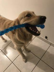 jouet-à-lancer-chien