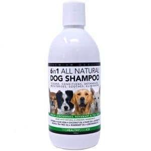 shampoing-naturel-chien