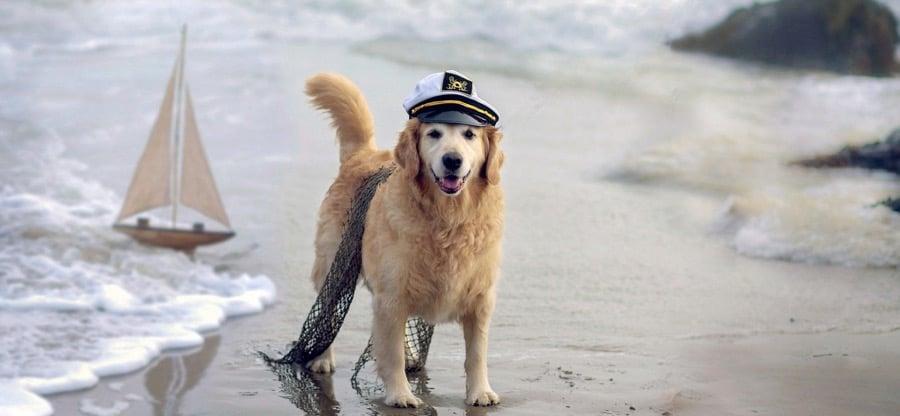 Voyage chien en bateau