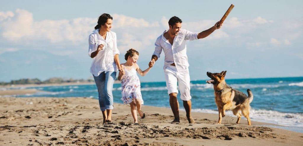 Voyager avec son chien : notre guide