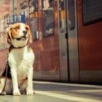 Voyager avec son chien dans les transports en commun